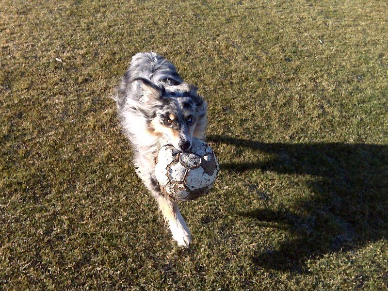 Amicus at Lancaster dog park