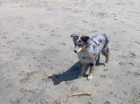 Dog_beach_002_1
